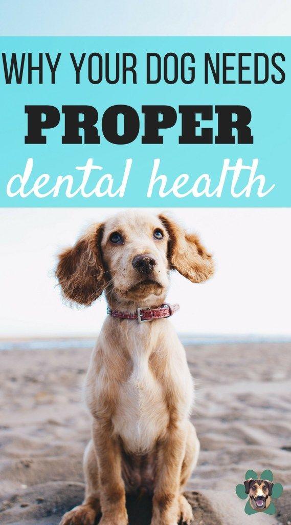 Why Your Dog Needs Good Dental Health Dog Training Dog Friends