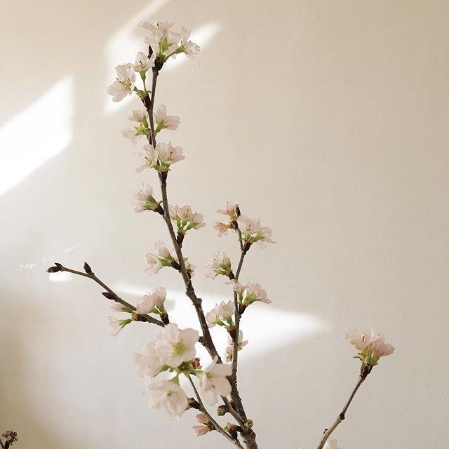 ほんのり色付いたペールピンク  今年凄く気になる色  春はもう直ぐそこに  http://www.jpress-l.jp/collection/  http://www.jpress-l.jp/ #Jpress#Jpressladies#Jプレス#2017sscollection #ピンク#pinkknit#sakura