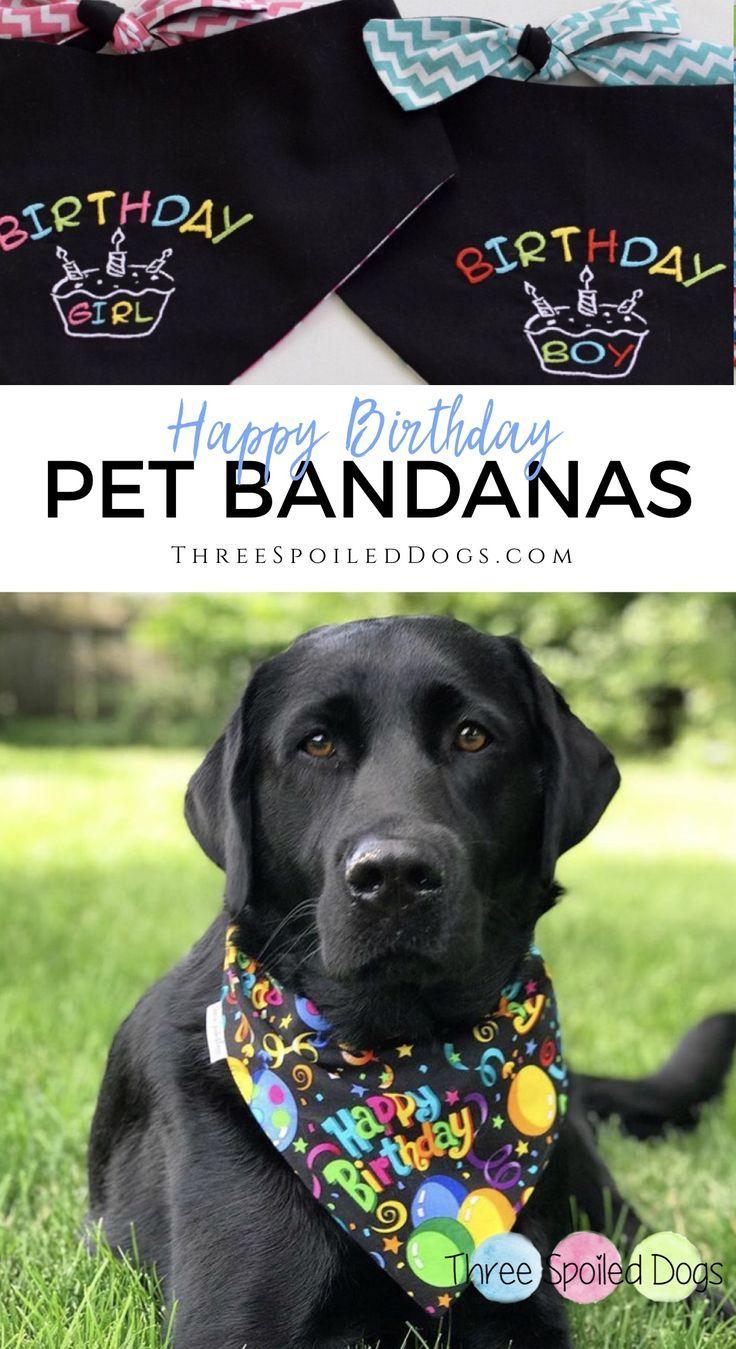 Girl Dog Birthday Bandana Wild One Birthday Dog One Year Old Dog Bandana Birthday Dog Scarf First Year Dog Bandana