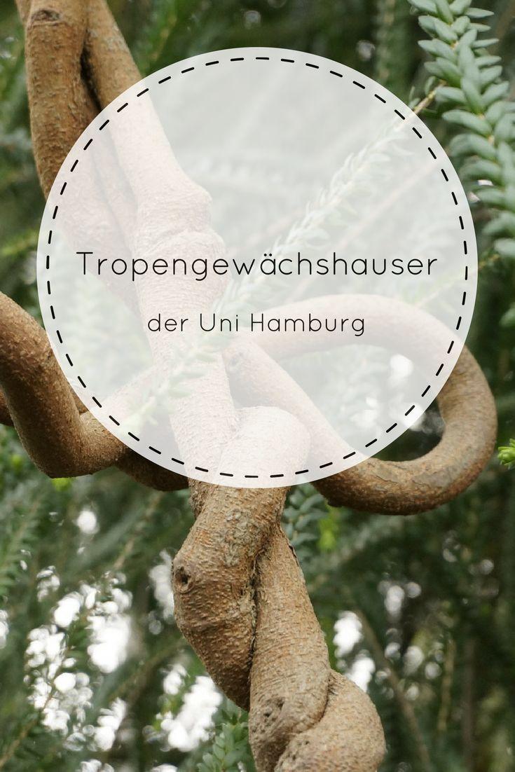 Die Tropengewächshäuser der Uni Hamburg - mein Tipp für alle, die in der dunklen Jahreszeit ganz viel Grün sehen wollen