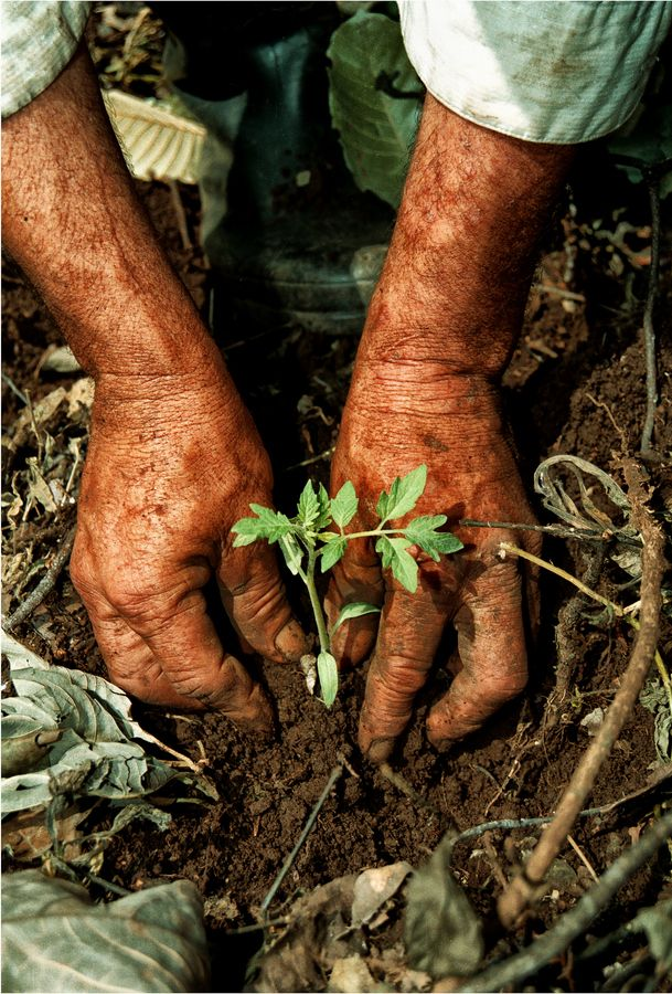 I carry with me the seeds of a new season of growth. Hands - Manos campesinas • Augusto Vázquez