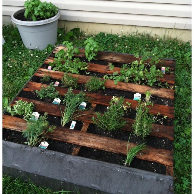 My pallet herb garden