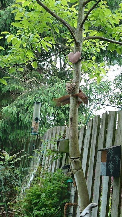 Mijn eekhoorn
