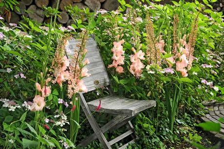 09 Der Sommer im heimischen Garten mit lachsfarbenen Gladiolen