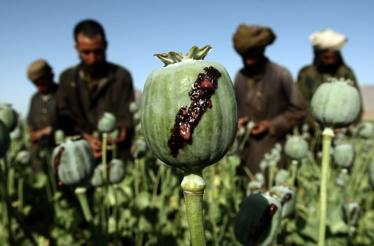 15 years of war has done little stop production in the world's opium capital