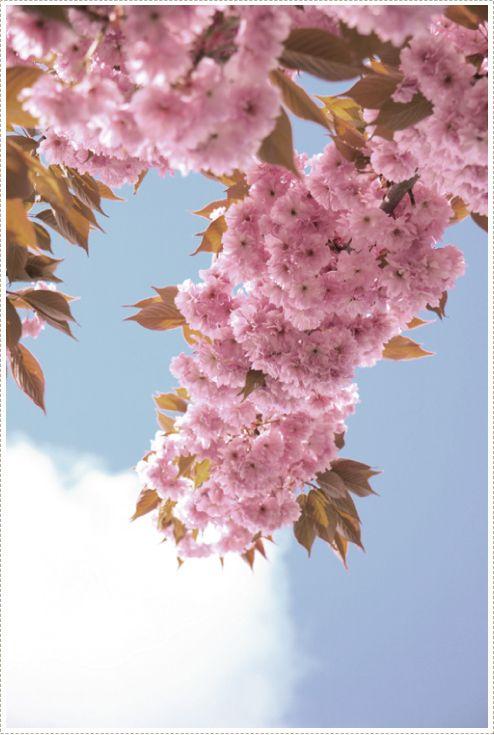 meer lente maar nog steeds ah zo mooi