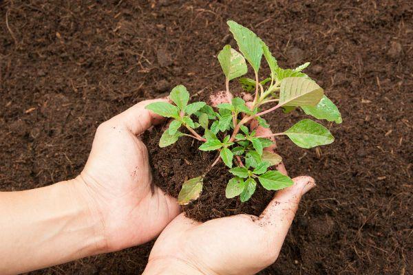 Veja aqui dicas simples de adubação para o seu jardim e vasos de plantas, flores ou temperos! Aprenda a fazer adubo caseiro com dicas simples.