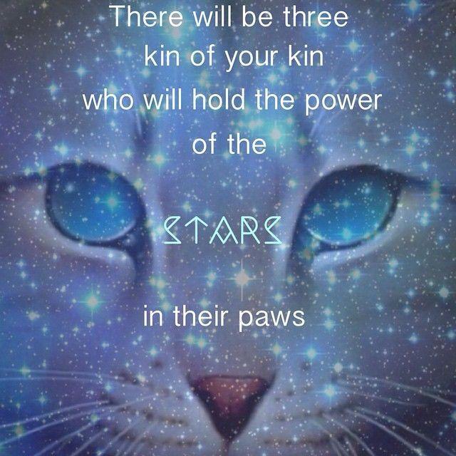 Warriors The Prophecies Begin Book 3: 36 Best Warrior Cats Images On Pinterest