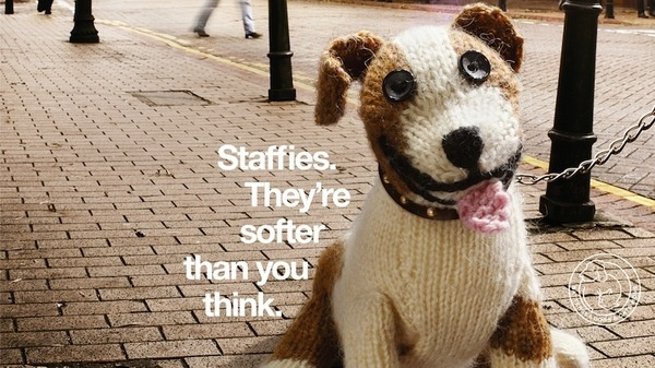 Knitted Staffie campaign for Battersea Dogs Home