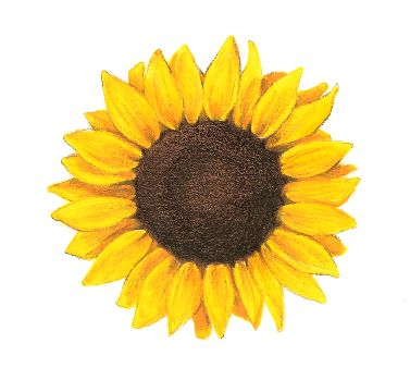 Sunflower tattoo, add white smiley face