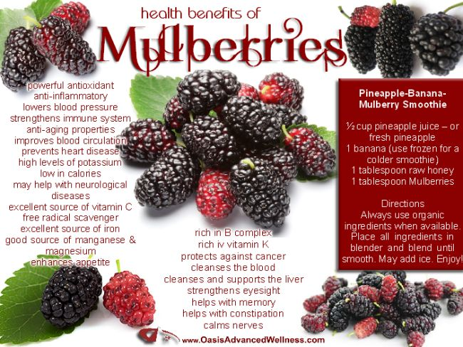 cb930d9f7e Health Benefits of Mulberries [Healthy, Smoothies, Vegetarian, No-cook,  Breakfast, Desserts, Nutrition, Fruit] | Health | Health, Health benefits,  Mulberry ...