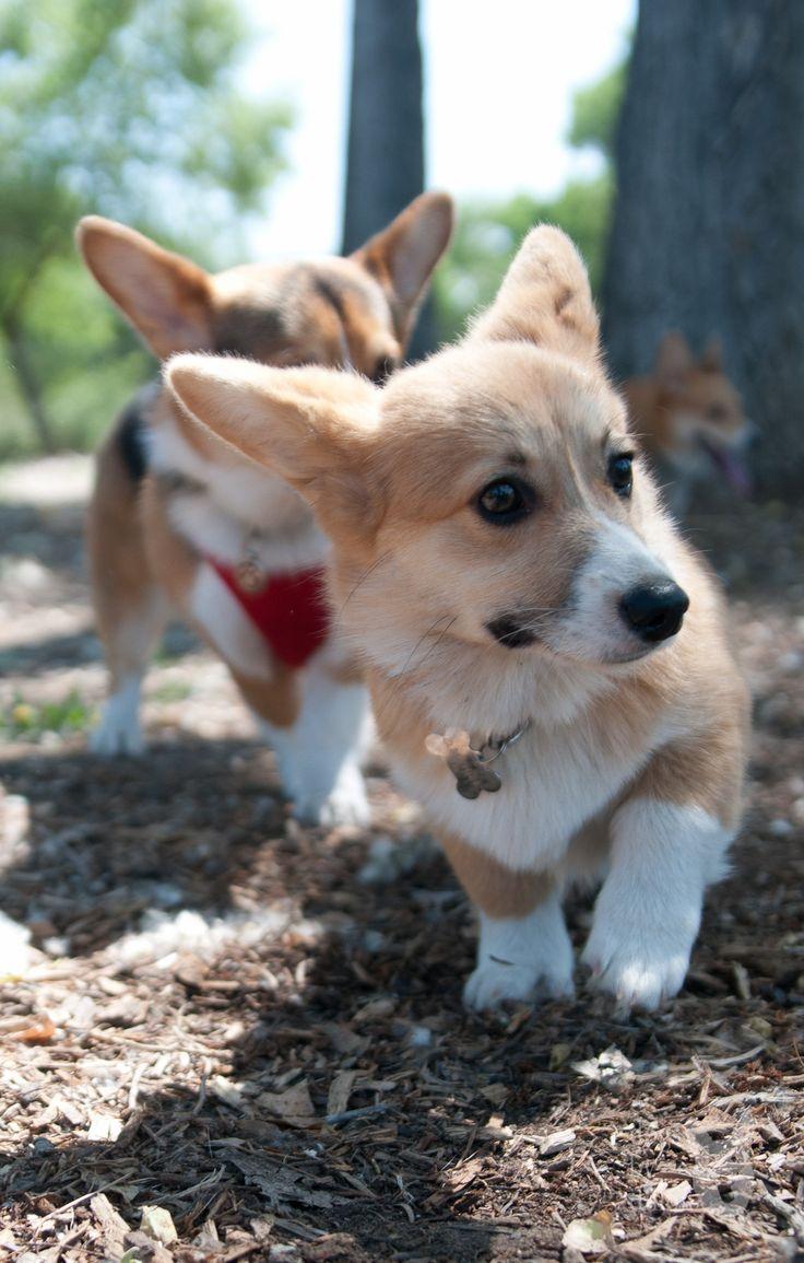 Adventuring dog, breeds