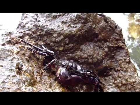 Natura w Chorwacji https://www.youtube.com/watch?v=DgtLtoaZs40 #croatia #chorwacja