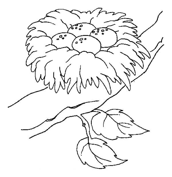 Bird Nest Eggs Coloring Page Coloring Pages Bird Coloring Pages