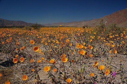 Valle de la Muerte EE.UU.