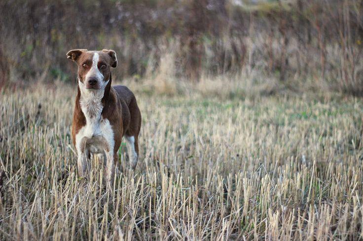 #straydog
