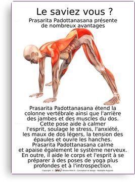 prasarita padottanasana  yoga  mouvements de yoga