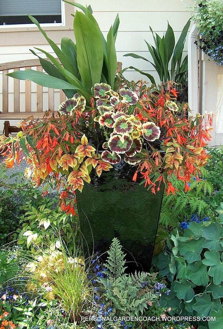 cast iron plant tri color geranium fuchsia autumnale black mondo grass and begonia