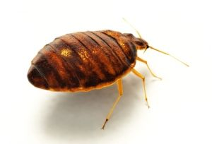 http://www.aboveallpests.com/services/  New Jersey Pest Control Company ---> http://www.aboveallpests.com/category/news/ #monmouthcounty #pestcontrol #tomsriver #pests #bugs #barnegat #NJ #jerseyshore #manchester #jackson #forkedriver #lacey #exterminator #lakewood #stafford manchester pest control manchester exterminator jackson pest control jackson exterminator stafford pest control