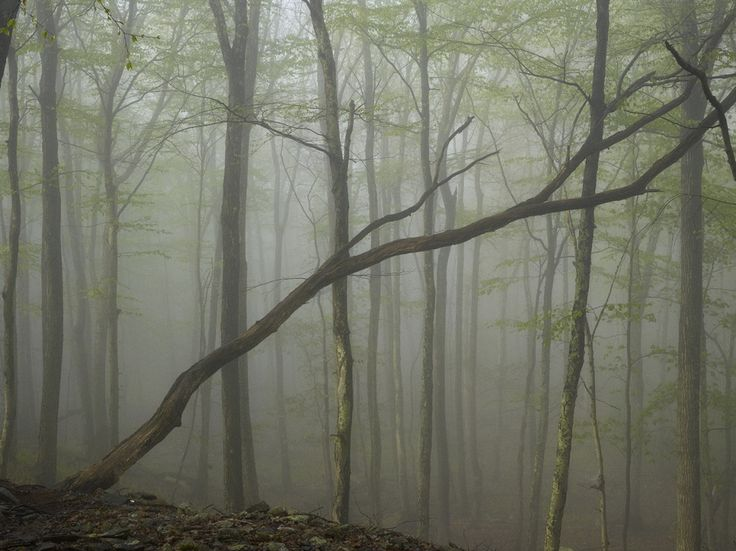 Туманный сюрреализм в снимках Ноя Калина / Фотография / Multitude — онлайн-журнал о фотографии, дизайне и архитектуре