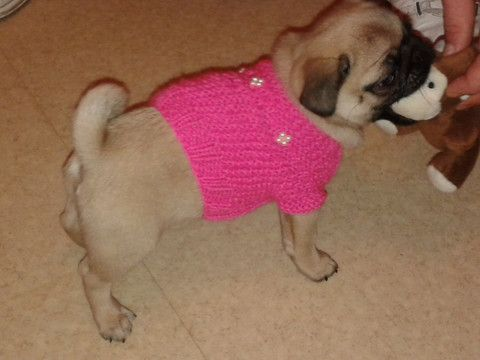 A beautiful little sweater for your fur baby, dog sweater, pet sweater – CUTIEDOG DESIGNS