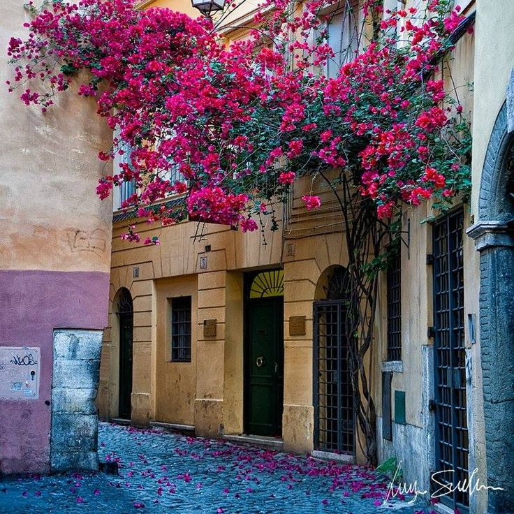 275 Best Rome In COLOR Images On Pinterest