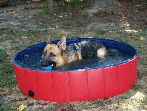 21 Best Images About Dog Bath Tub On Pinterest Outdoor