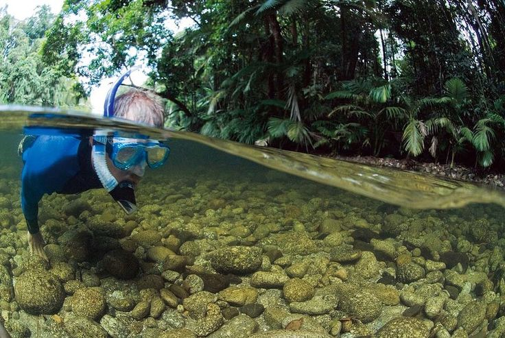 Drift-snorkel in a Rainforest: Mossman River, Far North Queensland #Australia