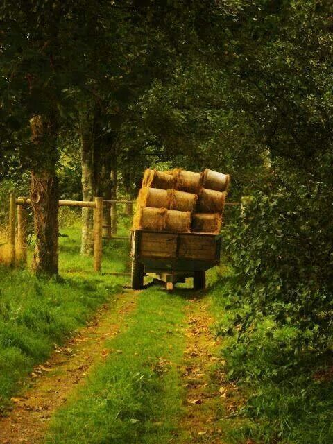 **Country Life