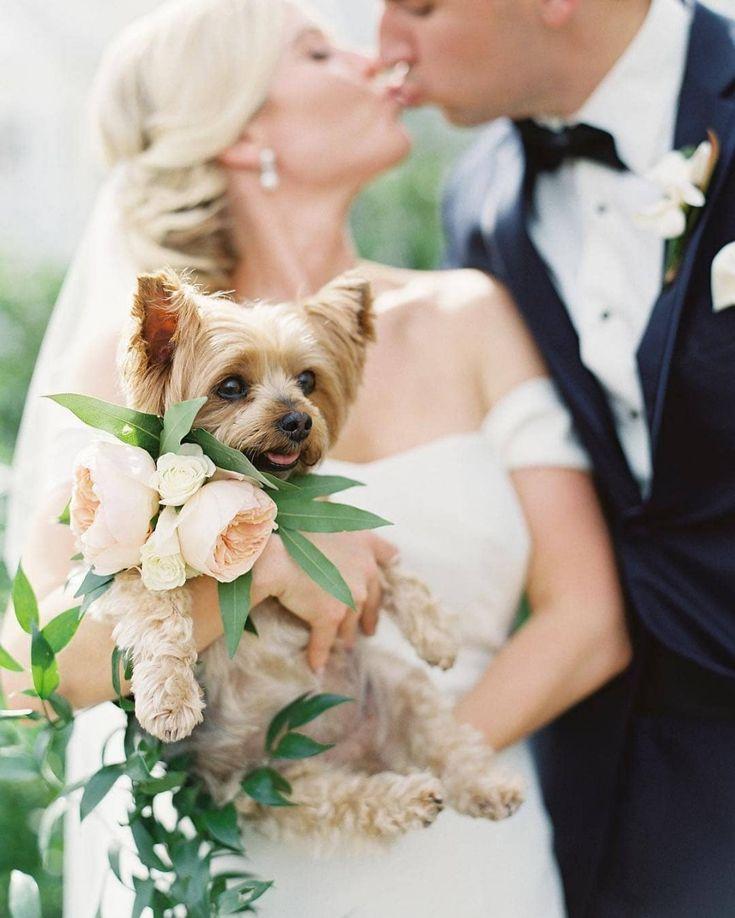 сделать картинки свадебные про животных эту девушку сети