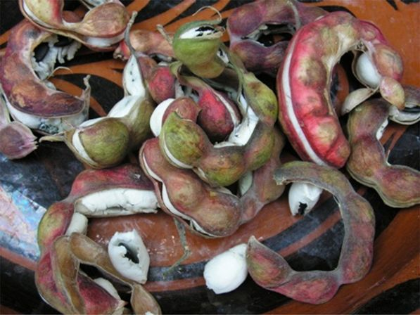 Guamuchil fruit.. de Guamuchil Sinaloa claro!