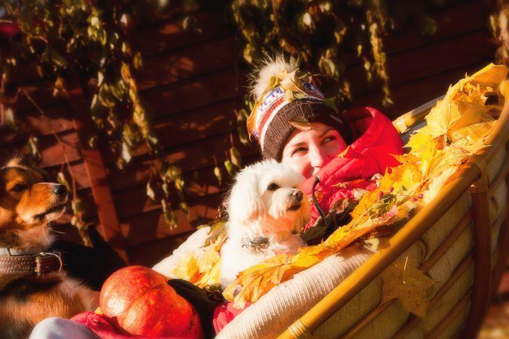 Photo idea with dog autumn
