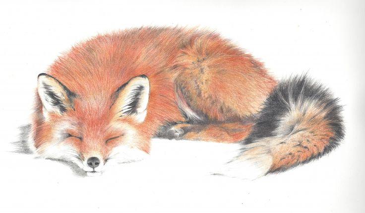 red fox drawings