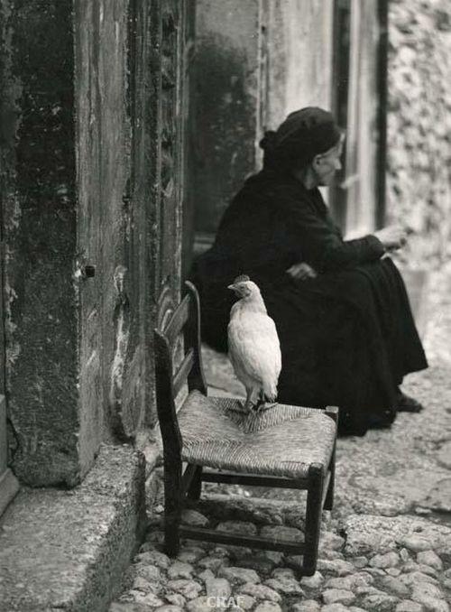 """deltempoedeicolori: """" Giuseppe Möder - Donne di Scanno, 1955 ( la gallina mi mancava ) ^^ """""""