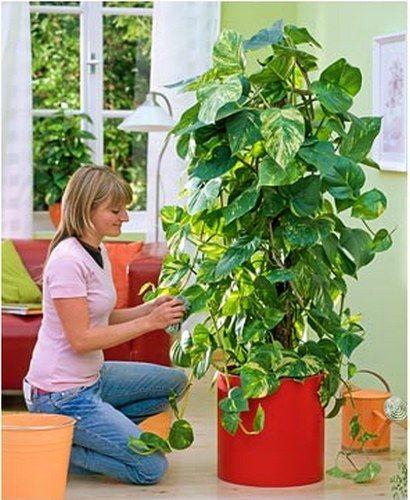 Рекомендации по очистке комнатных растений от пыли