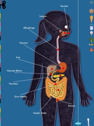 LE CORPS HUMAIN : Explorez un modèle fonctionnel du corps humain. Chaque partie du corps est animée et interactive : les battements du cœur, le gargouillis des intestins, la respiration des poumons, le toucher de la peau et les yeux. Conçu pour les enfants de 4 ans et plus qui veulent découvrir de quoi nous sommes faits et comment nous fonctionnons.