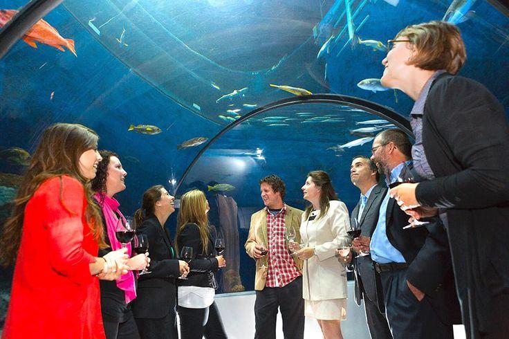 Événement corporatif dans le tunnel de l'Aquarium du Québec. Réunion et cocktail dans un décor spécial.