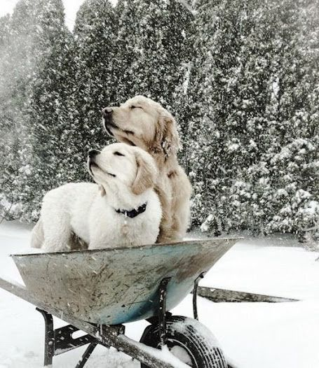 Snow on dogs