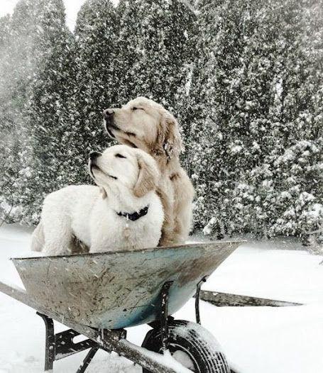 Snow on dogs