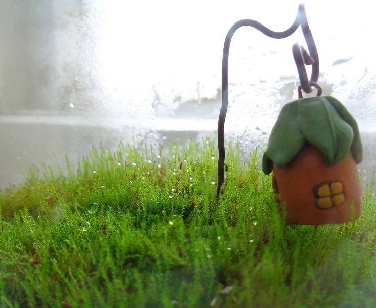 А тем временем мох растет с каждым днем..... почти догнал высоту домика. Надеюсь на фото хорошо видно детали .#маст_НатаН #моймох #мох #moss #mymoss