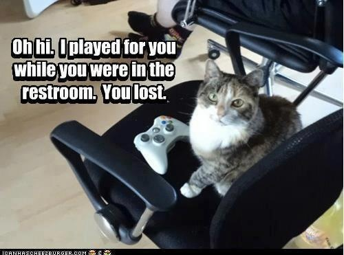 Cute cat lost playing the video game funny cute video