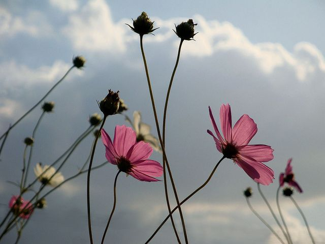 kosmos | Flickr - Photo Sharing!