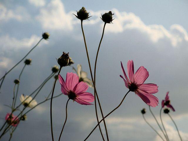 kosmos   Flickr - Photo Sharing!