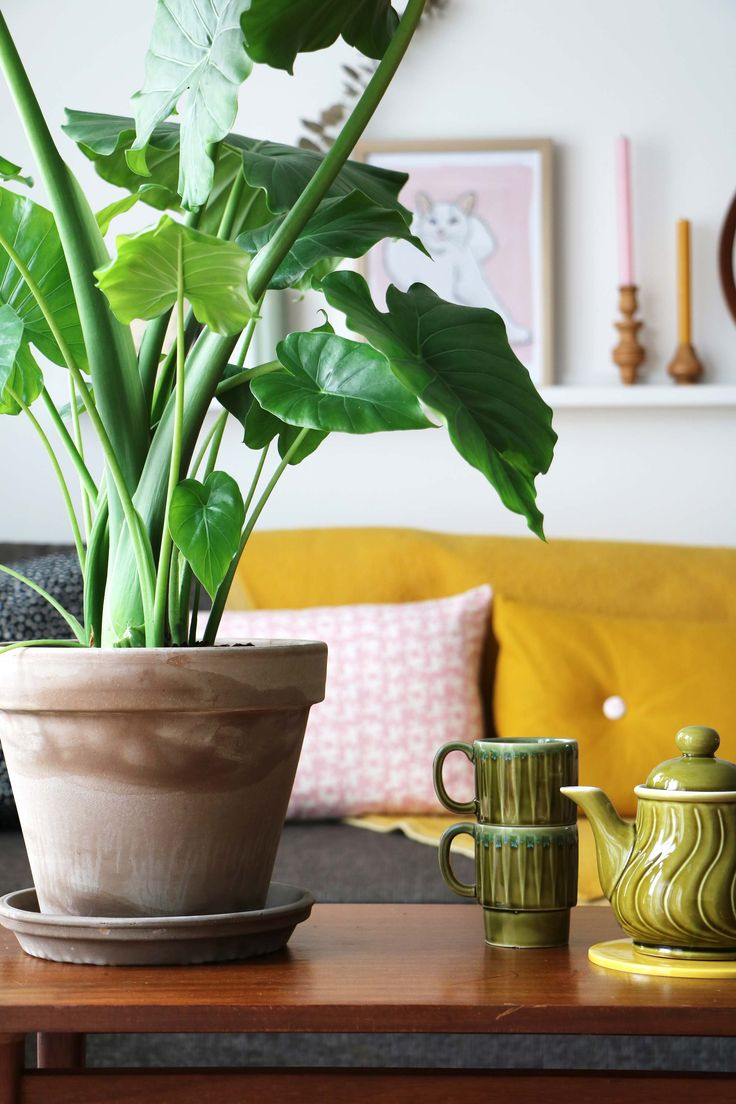 MY ATTIC for vtwonen - air purifying plants - greens Photography: Marij Hessel