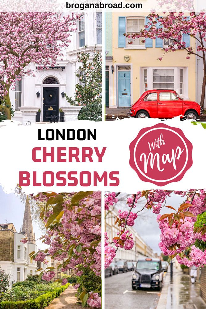 Where To See Magnolia And Cherry Blossom In London Printable Guide And Map Travel Guide London England Travel London Travel