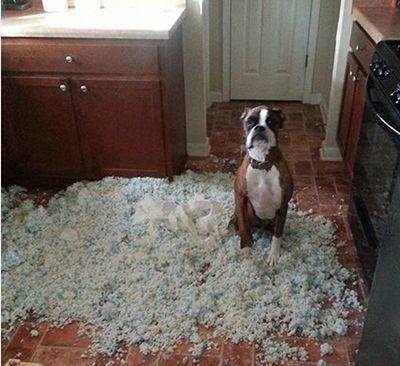 Köpekleri evde yalnız kalmaya alıştırma hakkında basit ipuçları. Yeni köpek sahiplenen çalışan insanların, yalnız kalan köpekleri için basit yöntemler