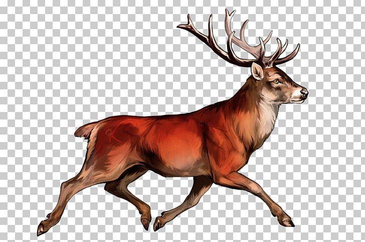White Tailed Deer Irish Elk Red Deer Reindeer Png Irish Elk Whitetail Deer Deer