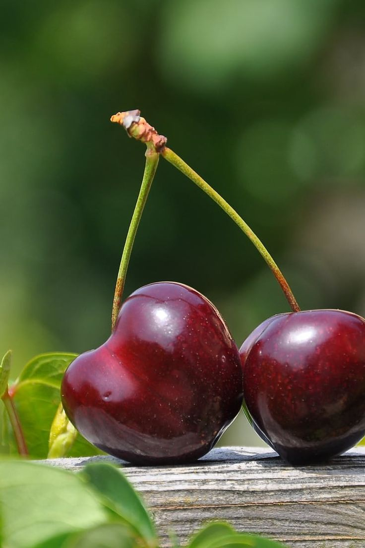 Close Up Photography of a Red Cherry Fruit