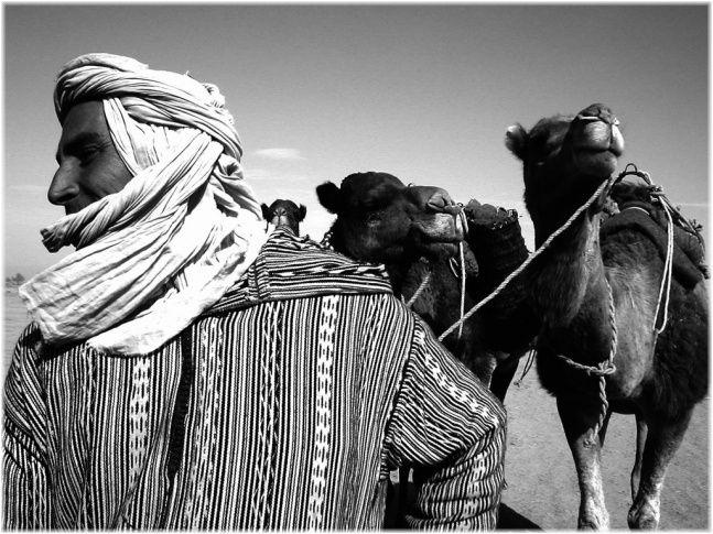 camel, morocco