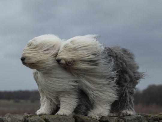 Wind !